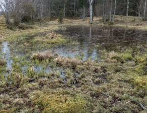 Bild 5 en liten sjö