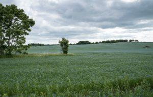 Linfält på östgötasidan - foto Hans S